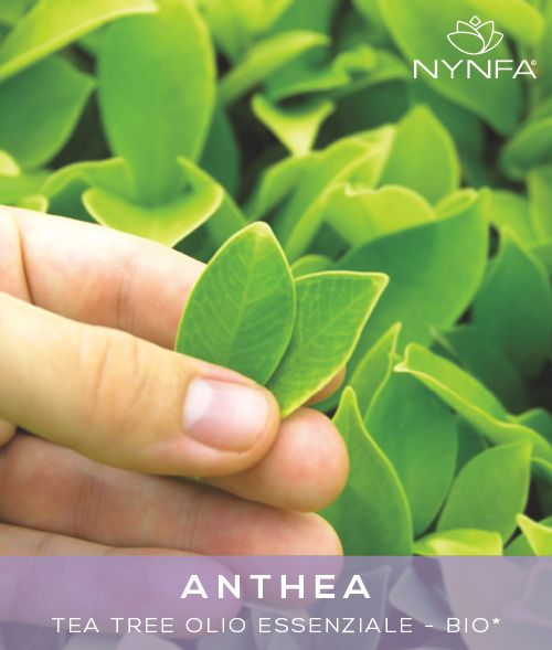 ANTHEA - Tea Tree Olio Essenziale Bio*. *ingredienti da origine biologica certificata