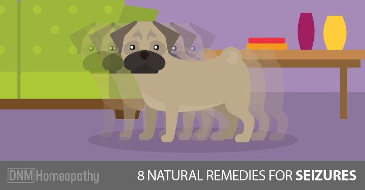 If your dog gets seizures, and you are looking for a natural way to treat them - Here are 8 natural remedies for your dog's seizure...