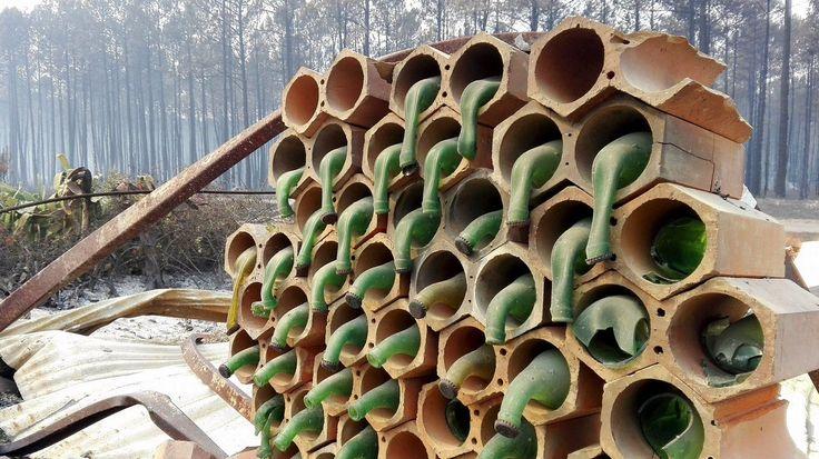 Винные бутылки после лесного пожара в Португалии