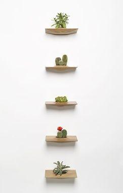 Plant Pods by Domenic Fiorello Studio