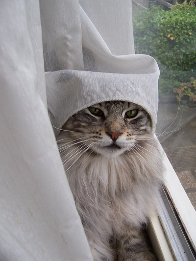 """""""Yes, I am still cool with a curtain on my head. Any further questions?"""""""