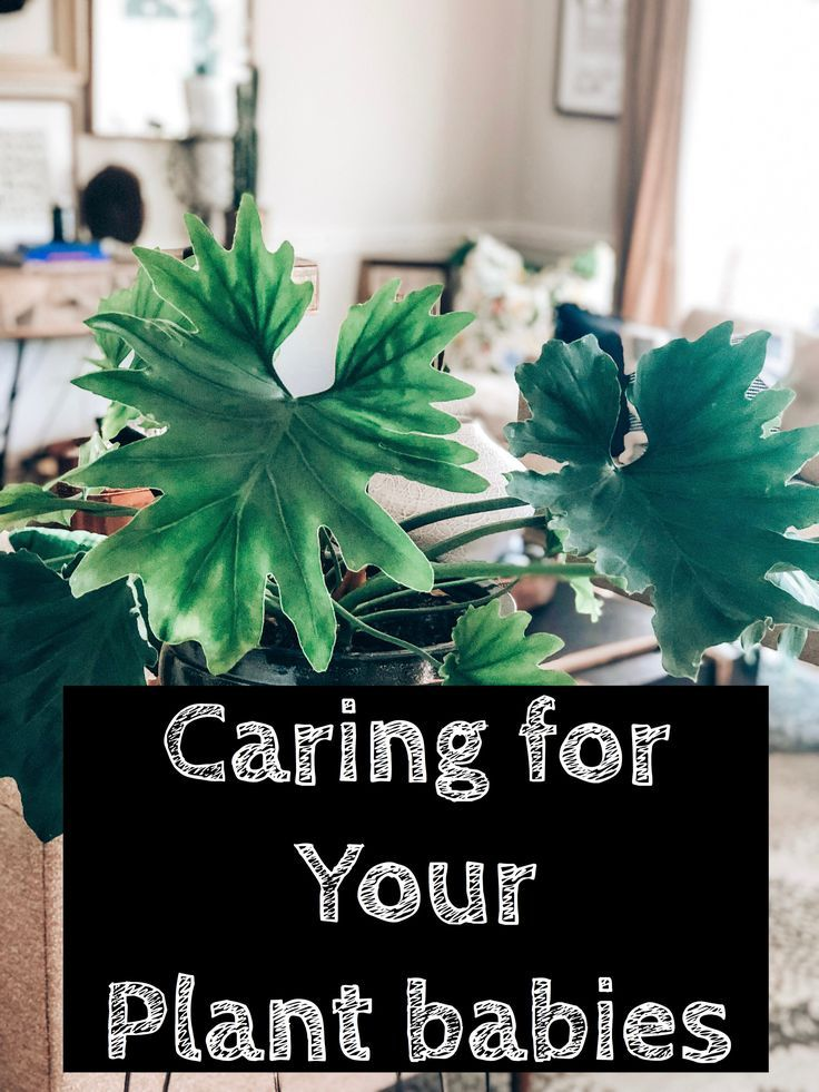 Caring For Plant Babies Plants Plant Life All Plants