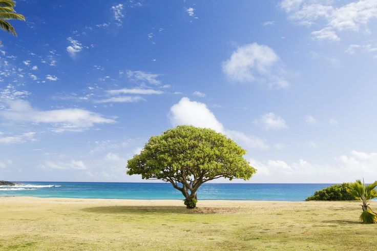 ❕ Green Tree on White Sand Near Sea Shore - download photo at Avopix.com for free    📷 https://avopix.com/photo/34389-green-tree-on-white-sand-near-sea-shore    #landscape #sky #tree #grass #rural #avopix #free #photos #public #domain