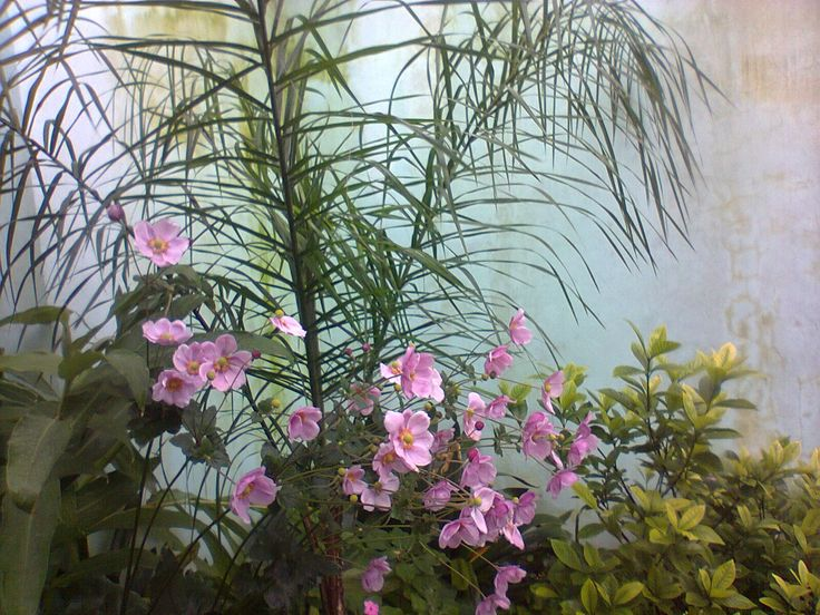 tip : palmera pindó rodeada de flores