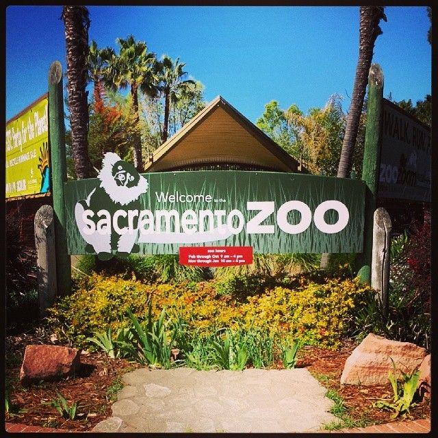 Sacramento Zoo in Sacramento, CA. Went here