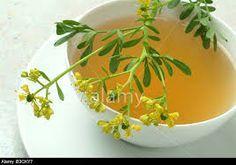¿Para que sirve el té de ruda? #salud #ruda #té