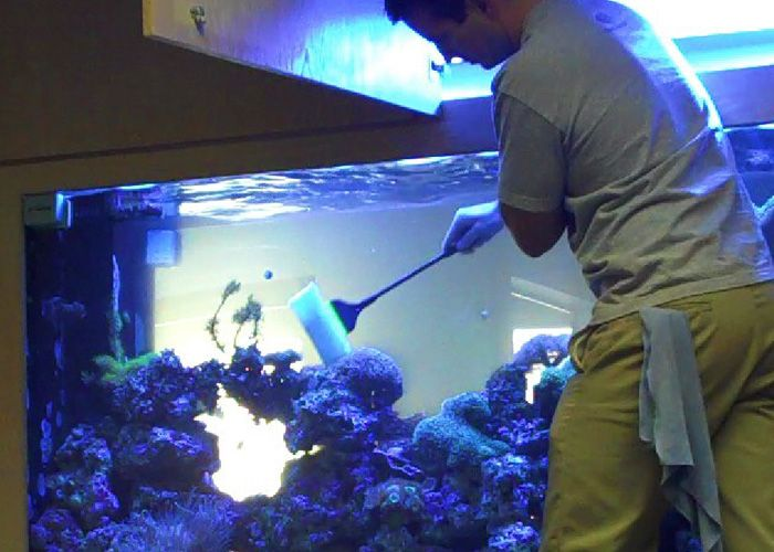 Decorate your #room, #office with a beautiful looking aquarium from #RentAquarium -
