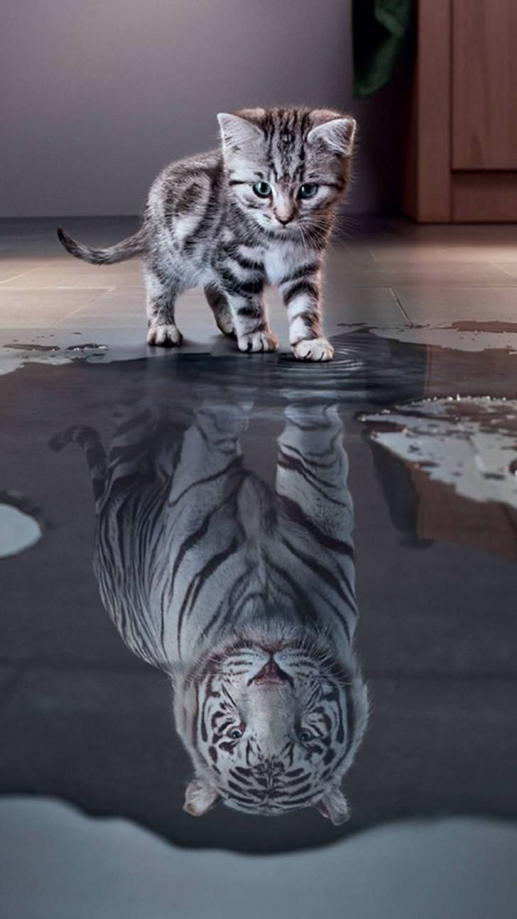 Tiger White In 2020 Cute Cat Wallpaper Kitten Images Cute Baby Animals