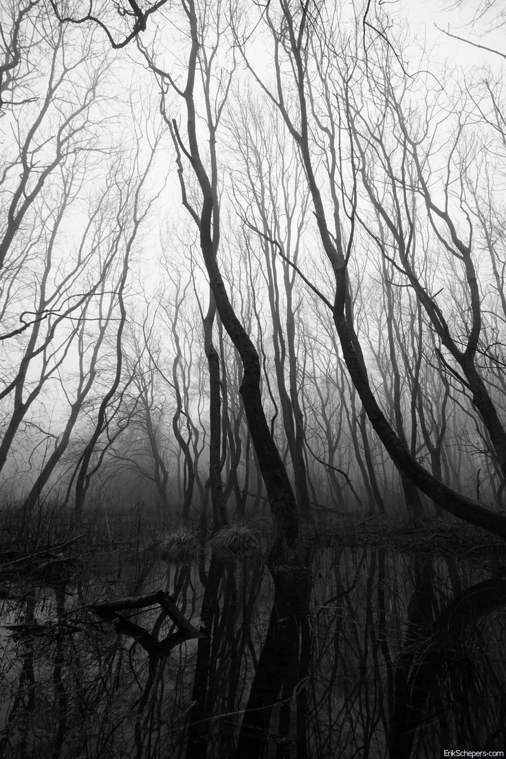 Trees www.erikschepers.com What lurks in the woods  #Mist #Fog #foggy #mistig #weg #pad #road #woods #susteren #limburg #nederland #bomen #trees #nevel #morning #winter #early #spring #cold #path #walk #dutch #netherlands #holland