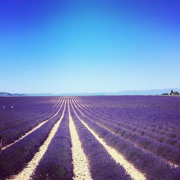The Lavender Road - Plateau de Valensole