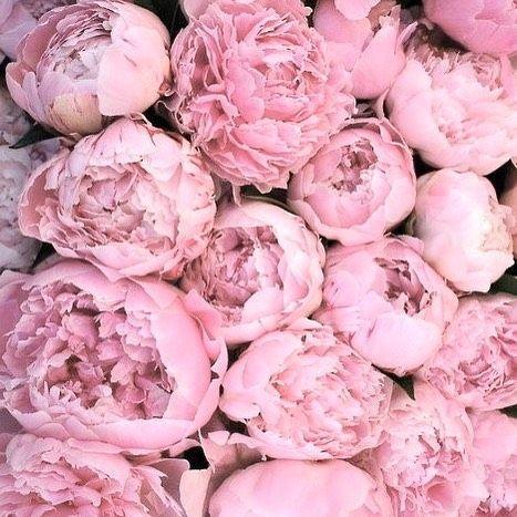 Bellamummablooms Peony Pink Love Bellamumma