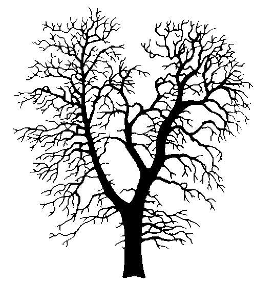 Best Oak Tree Silhouette 17913 Clipartion Com