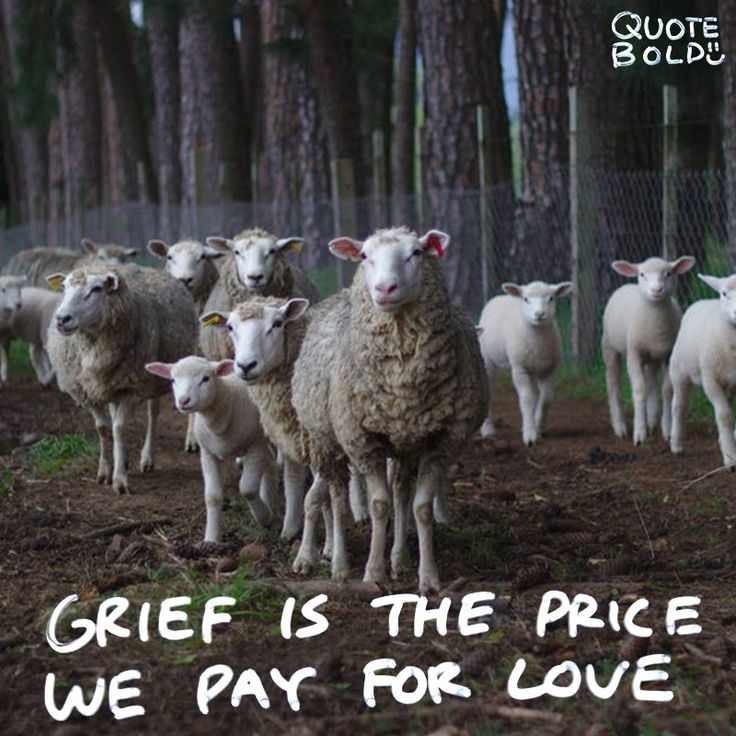 Saying Quotes About Sadness: Best 25+ Condolences Ideas On Pinterest