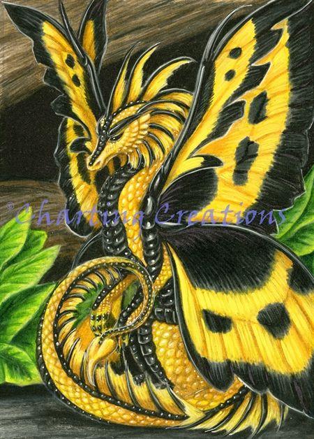 Yellow Poison Dragon Fly