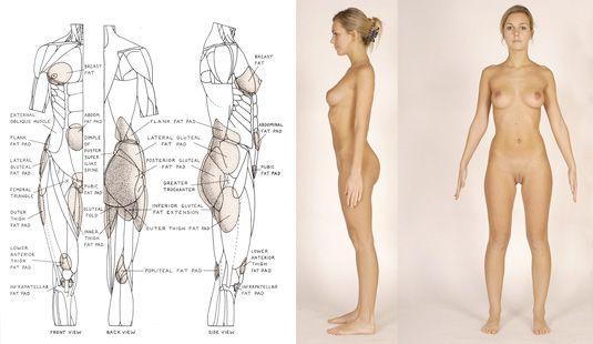 Anatomy part 1: Sculpting the torso   3D   Creative Bloq