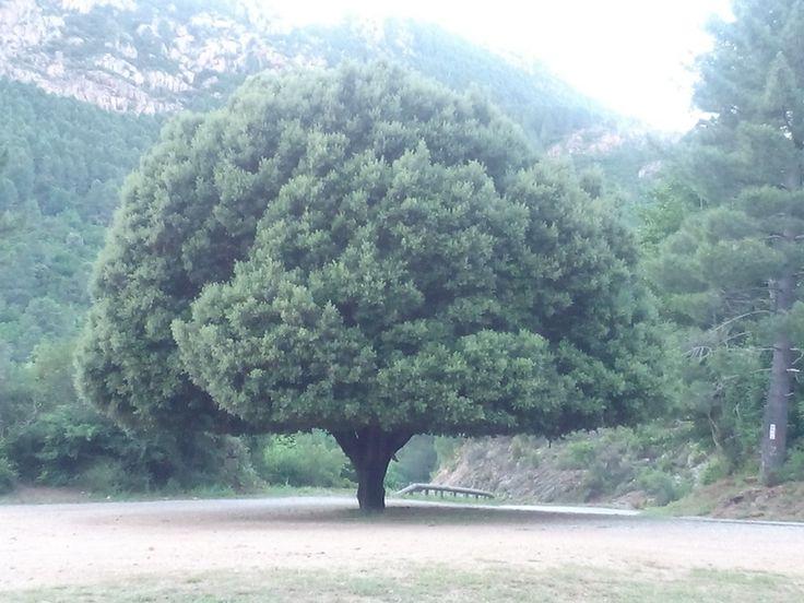 #Corsica
