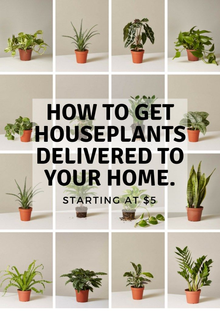 How To Get Houseplants Delivered To Your Home Houseplants Cool