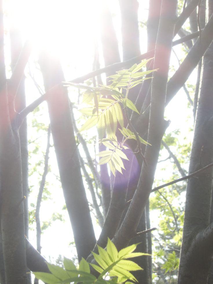Green leaves meet daylight.