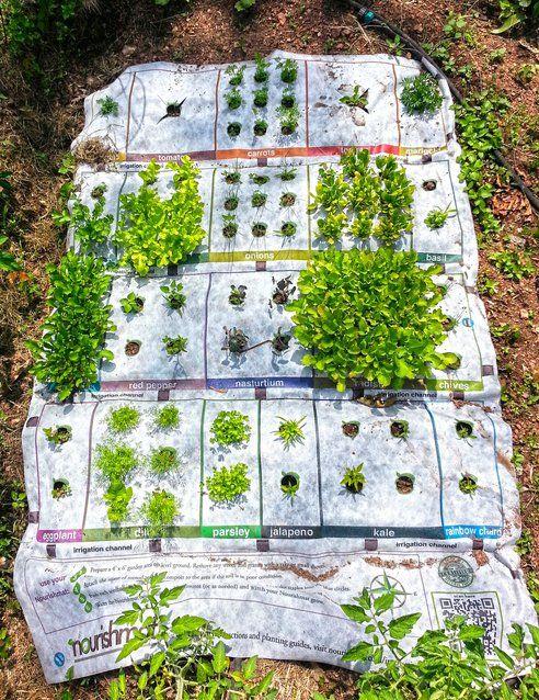 a kickstarter to kick off your backyard garden gardens the plant and vegetables