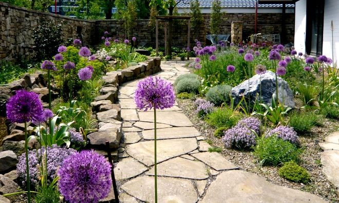 Mediterranean style planting with alliums, thyme and lots of well placed hardscaping.