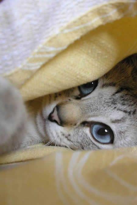 18 coisas que apenas donos de gatos compreendem , é só abrir e conferir | Ronronar