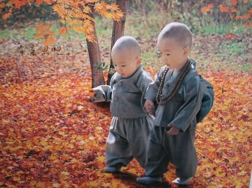 Baby Buddhist Monks..
