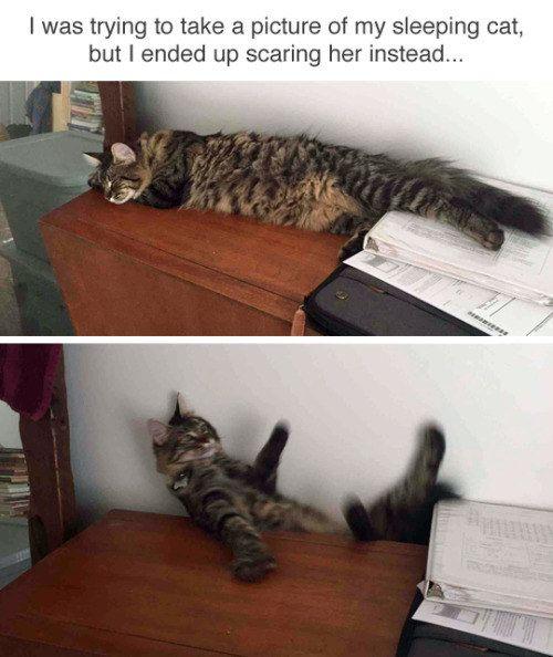 Einfach nur 19 Bilder von Katzen, die drolliger nicht sein könnten