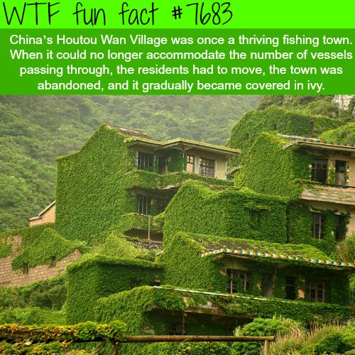 Best Facts Images On Pinterest Wtf Fun Facts Crazy Facts - 18 shocking facts nature