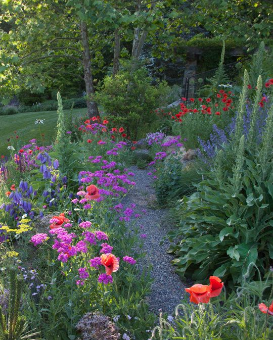 The Rock Ledge path is ablaze with Papaver rhoeas, Silene armeria, Campanula 'Sarastro' and Nepeta sibirica 'Souvenir d' Andre Chaudron'.