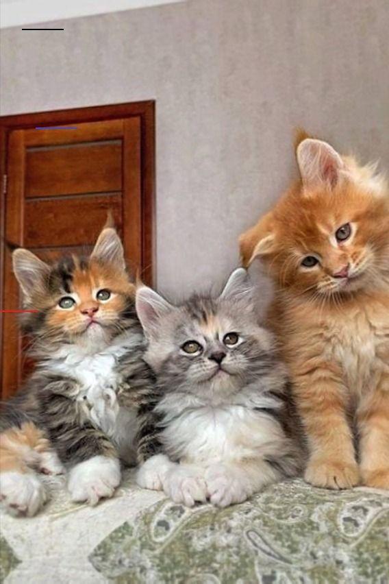 Pin Pa Cute Animals