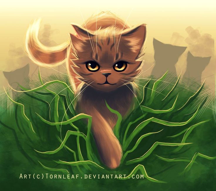 803 Best Images About Warrior Cats On Pinterest