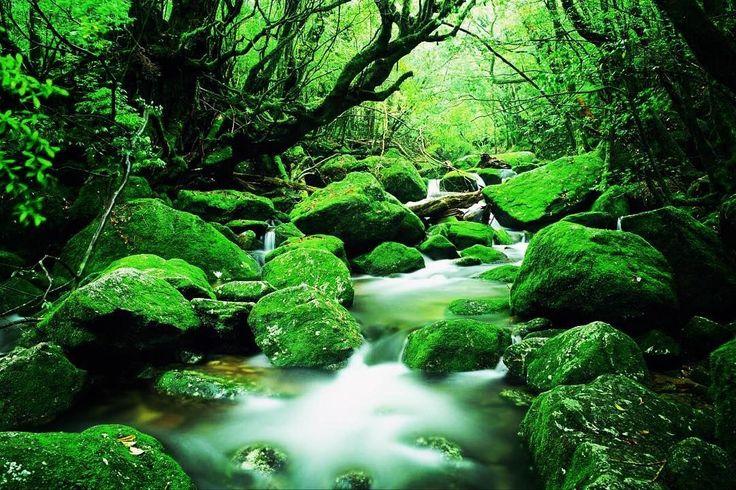 美しき屋久島の絶景「白谷雲水峡」とは