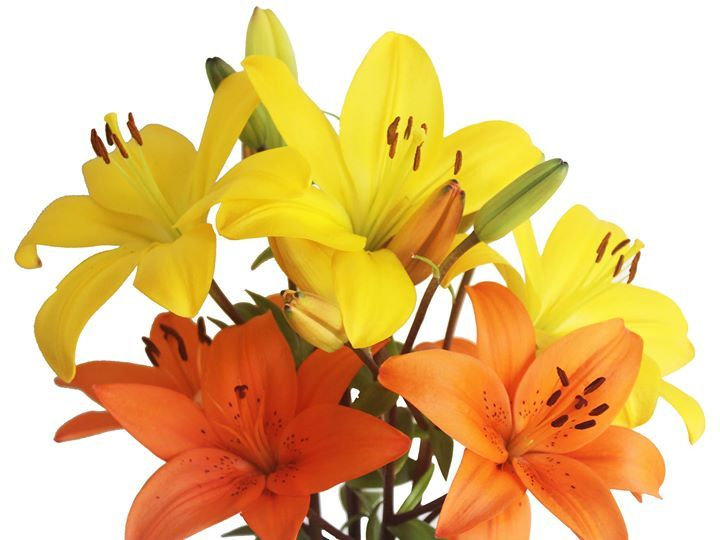 Liliesinatube offers online flower delivery for a fixed price of $47 Australia-wide, all inclusive.