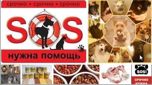 ДРУЗЬЯ ПРИЮТА И ЛЮБИТЕЛИ ЖИВОТНЫХ ОБРАЩАЕМСЯ К ВАМ ЗА ПОМОЩЬЮ!!! У нас на исходе кормовые запасы. На кормление собак на участке у нас каждый день уходит 8 килограмм крупы несколько килограмм мясных обрезков и костей. ПРОСИМ ВСЕХ КТО МОЖЕТ ПОМОЧЬ НАМ КРУПАМИ МЯСНОЙ ОБРЕЗЬЮ КОСТЯМИ СУХИМИ КОРМАМИ. ПОМОГИТЕ НАМ ПЕРЕЗИМОВАТЬ!!! Готовую еду супы остатки вторых блюд приносить НЕ НУЖНО готовим самостоятельно и только свежую пищу чтобы избежать отравлений животных. КОРМА МОЖЕТЕ ОСТАВЛЯТЬ В МАГАЗИНЕ…