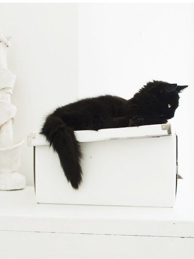 white and black cat   Very cool photo blog