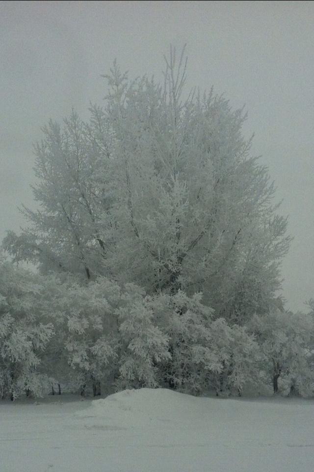 Winter in Saskatchewan - beautiful!