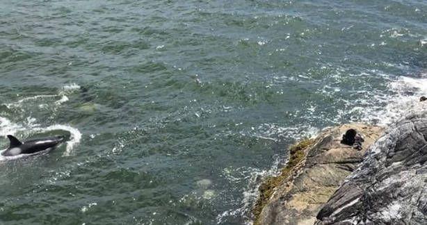 Gyilkos bálnák okoztak pánikot a népszerű strandon - VIDEÓ - https://www.hirmagazin.eu/gyilkos-balnak-okoztak-panikot-a-nepszeru-strandon-video