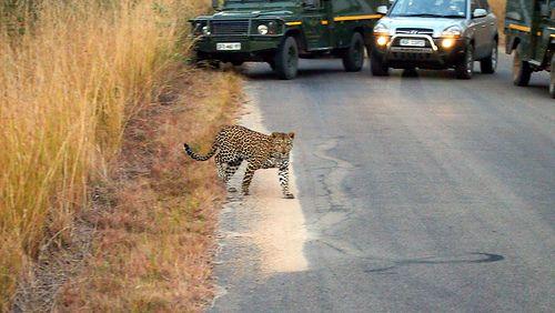 Kruger Park - South Africa (2013)
