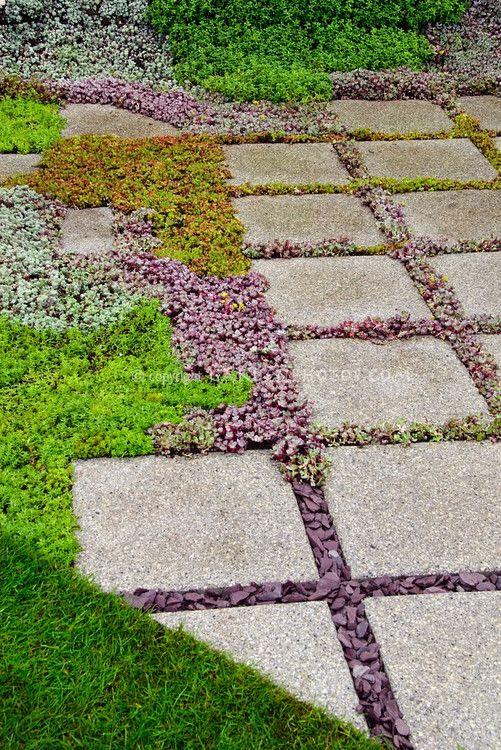 Sedum succulent plants between stone stepping stones, hardscape, gardening, landscaping, low water requirements