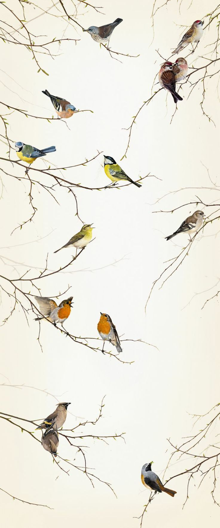 34 Best Birds Of A Feather Images On Pinterest Feather Curtains