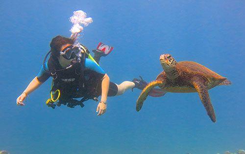 1 Maui Scuba Diving Lessons - Banyan Tree Divers | Hawaii