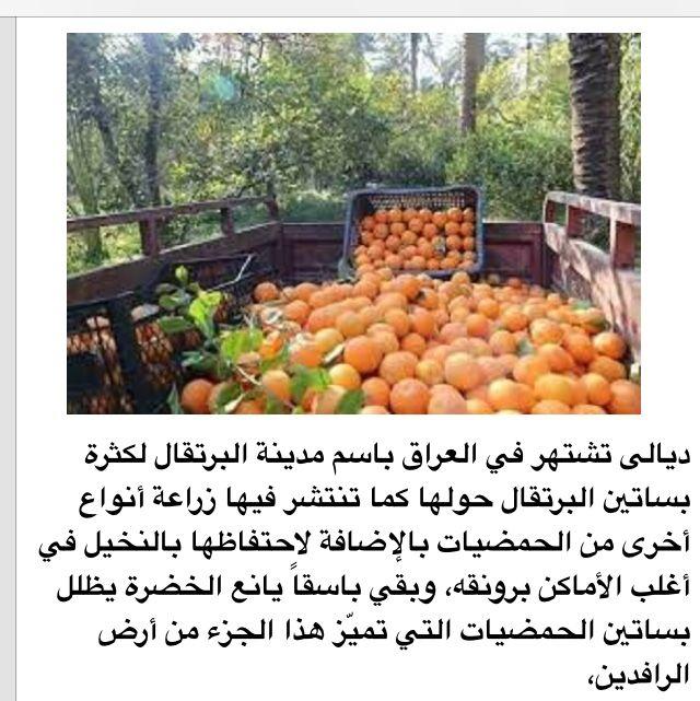 تعرفنا فيها على بساتين بلاد Pumpkin Patch Pumpkin Fruit