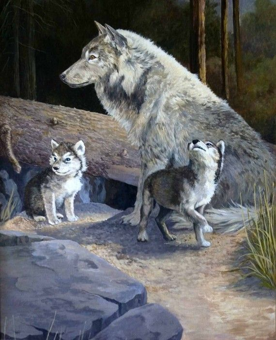 pictures of a wolf and her cubs by a den
