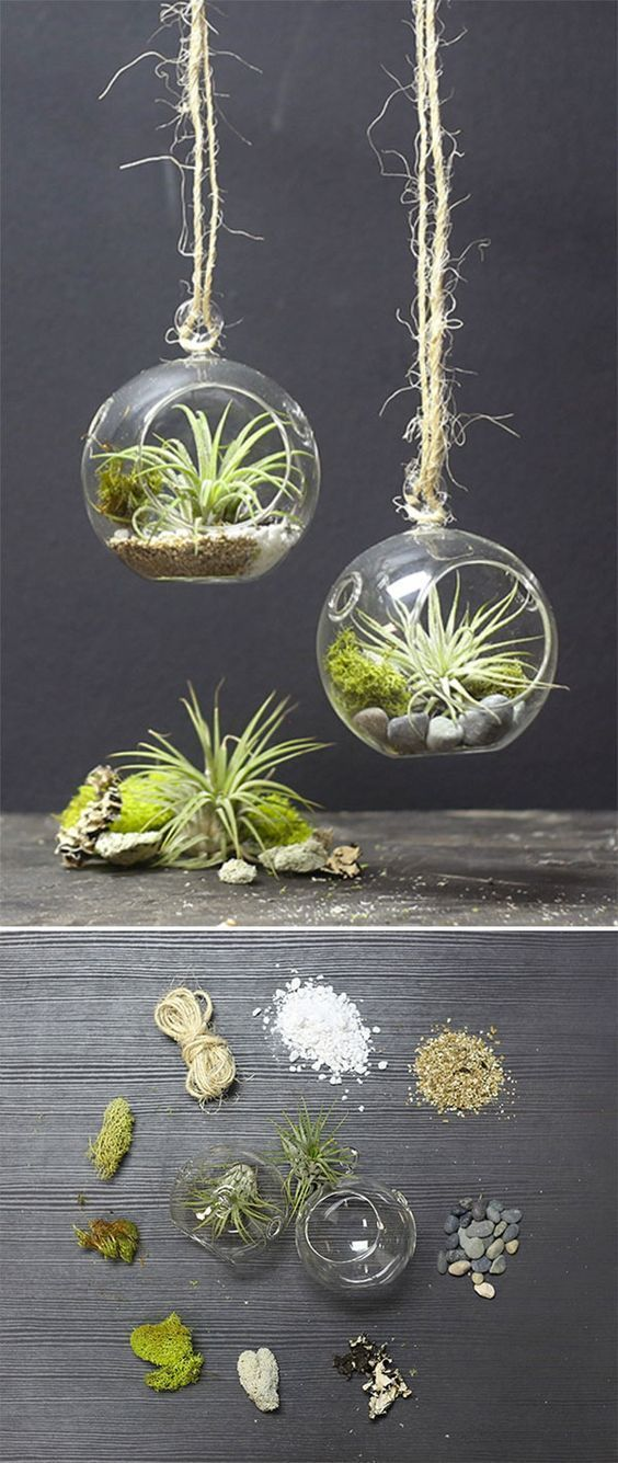 Sugi Bubble Terrarium Cactus Home Decor Pinterest Air Plants