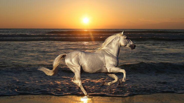 horses / sunset, sunrise - Google-Suche