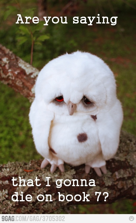 Poor Hedwig!: Geeky, Poor Hedwig, Stuff, Harrypotter, Harry Potter Owls Tattoo, Neat Things, Funny, Birds, Animal