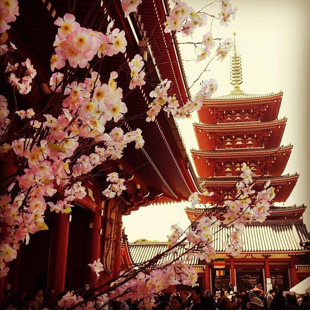 Sakura and the ancient capital in Tokyo