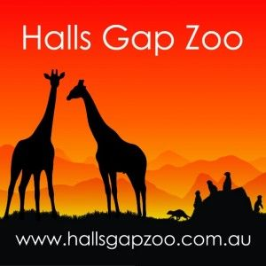 Halls Gap Zoo Fundraiser! Open Day, Gold Coin Entry. March 23.