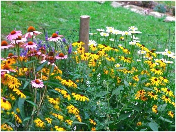 Arranging Flowers from the Garden with Perennials Flower Bed very good