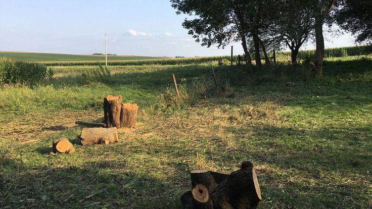 GAUL: Bringing nature home to the farm | Alma Gaul | qctimes.com http://qctimes.com/news/opinion/editorial/columnists/alma-gaul/gaul-bringing-nature-home-to-the-farm/article_d88122b9-3dfd-54a4-bcc1-838c3879a53a.html?utm_campaign=crowdfire&utm_content=crowdfire&utm_medium=social&utm_source=pinterest